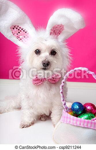 eier, ohren, ostern, hund, kaninchen - csp9211244