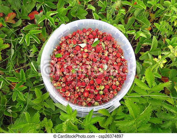 Eimer mit Erdbeeren - csp26374897