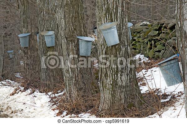 eimer, saft, ahorn, bäume, zucker - csp5991619