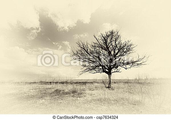 einsam, baum., tot - csp7634324