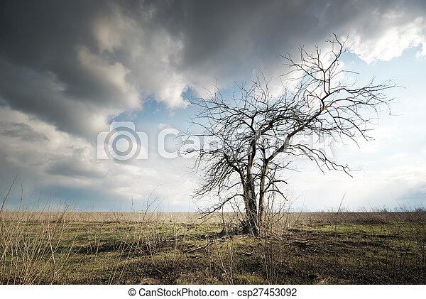 einsam, baum, tot - csp27453092