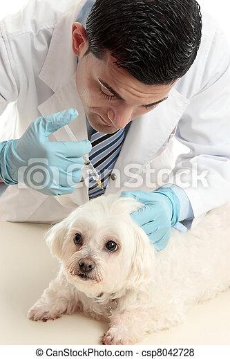 Einsetzen, haustier, tierarzt, nadel, spritze. Einsetzen, tierarzt ...