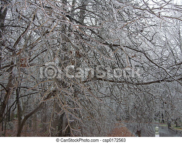 eis, bäume - csp0172563