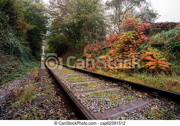 Eisenbahn im Wald - csp62391512