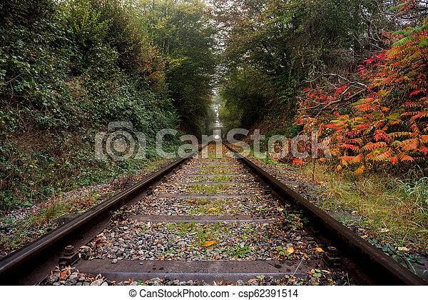 Eisenbahn im Wald - csp62391514