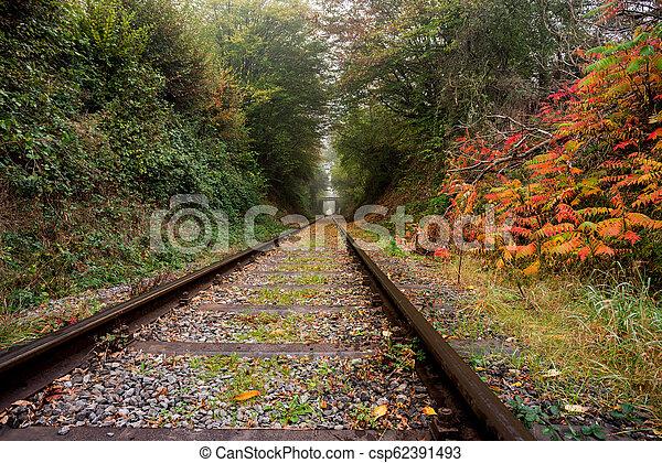 eisenbahn, wald - csp62391493