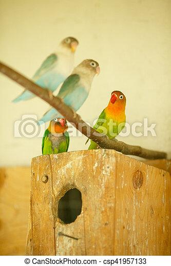 eksotiske, his, klar, papegøjer, bur, blokken - csp41957133