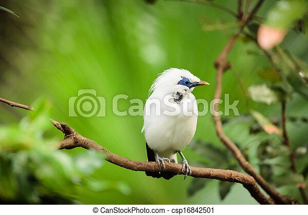 eksotiske, hvid fugl, branch - csp16842501
