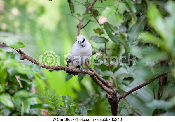 eksotiske, hvid fugl, branch - csp50735240