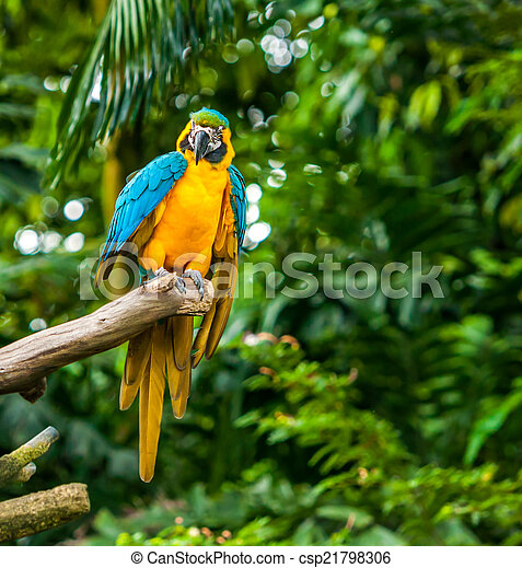 eksotiske, naturliv, branch, papegøjer, his - csp21798306