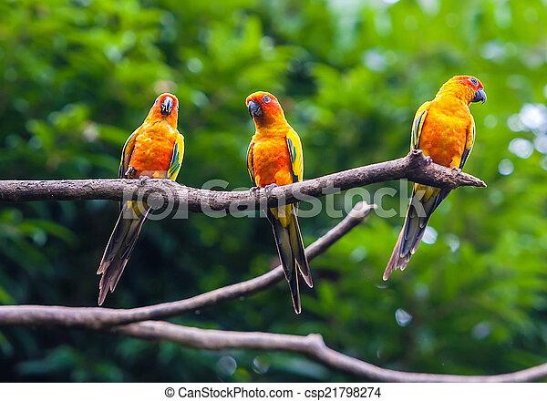 eksotiske, naturliv, branch, papegøjer, his - csp21798274