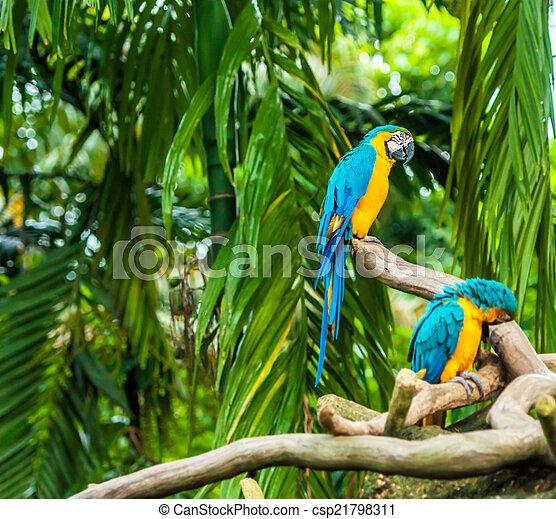 eksotiske, naturliv, branch, papegøjer, his - csp21798311
