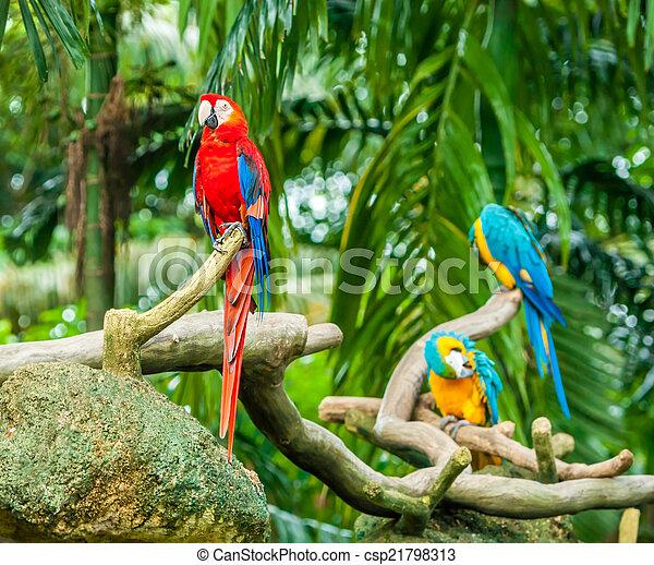 eksotiske, naturliv, branch, papegøjer, his - csp21798313