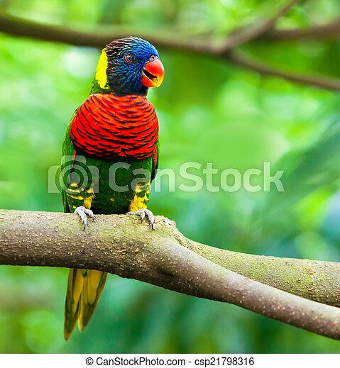 eksotiske, naturliv, branch, papegøjer, his - csp21798316