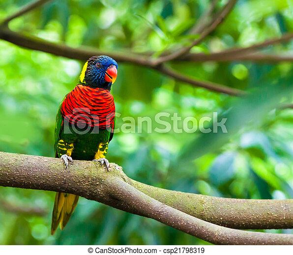 eksotiske, naturliv, branch, papegøjer, his - csp21798319