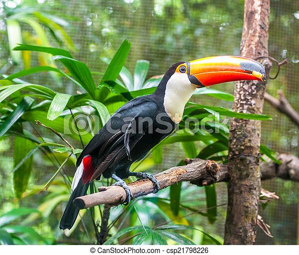eksotiske, naturliv, branch, papegøjer, his - csp21798226