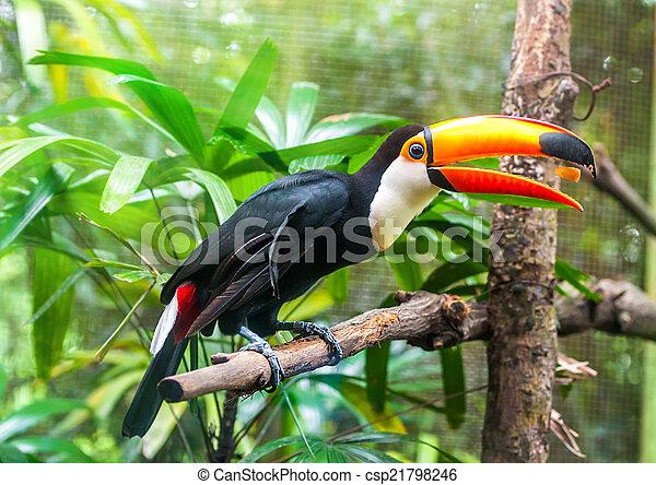 eksotiske, naturliv, branch, papegøjer, his - csp21798246