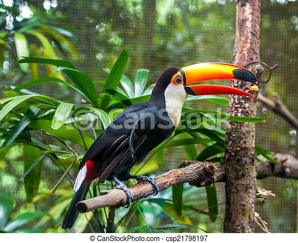 eksotiske, naturliv, branch, papegøjer, his - csp21798197