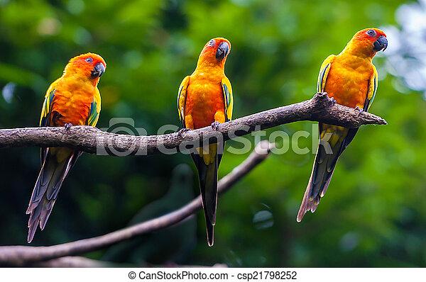 eksotiske, naturliv, branch, papegøjer, his - csp21798252