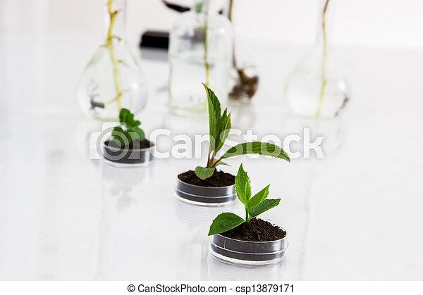 eksperimenter, flora, laboratory. - csp13879171