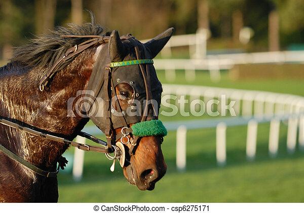 el competir con del caballo - csp6275171