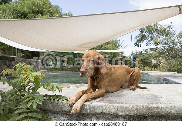 Perro tirado junto a la piscina en El Salvador - csp28483187
