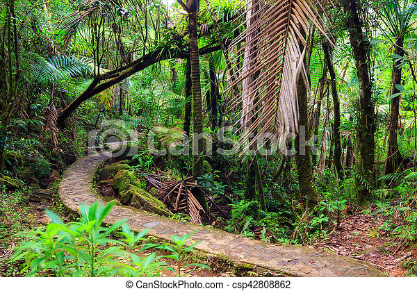 El Yunque national forest path - csp42808862
