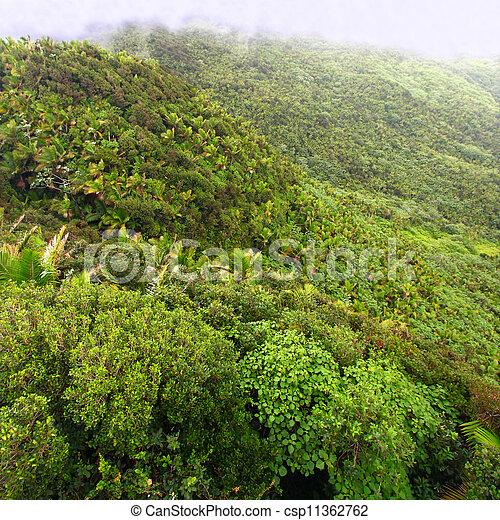 El Yunque National Forest - csp11362762