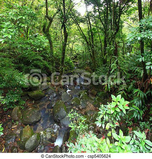 El Yunque National Forest - csp5405624
