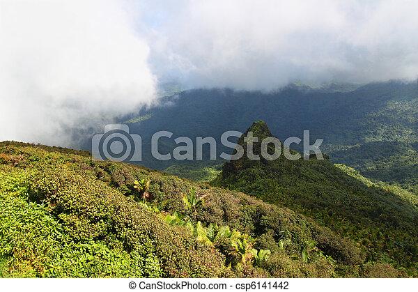 El Yunque National Forest - csp6141442