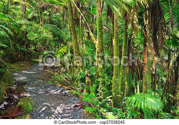 El Yunque Puerto Rico - csp37038245