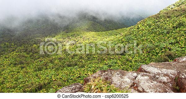 El Yunque Rainforest - Puerto Rico - csp6200525