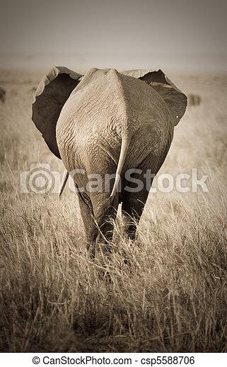 elefant, baksidaen beskådar - csp5588706
