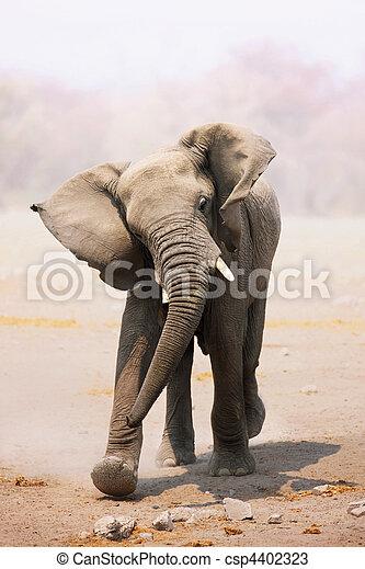 elefant, opladen, stier - csp4402323