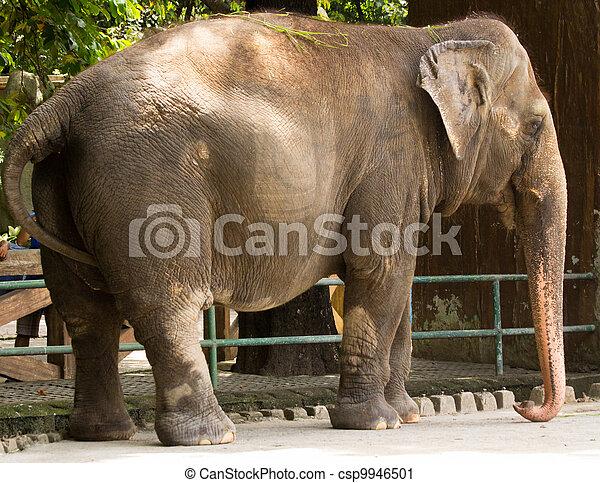 Elefante mali - csp9946501