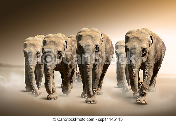 elefanti, gregge - csp11145115