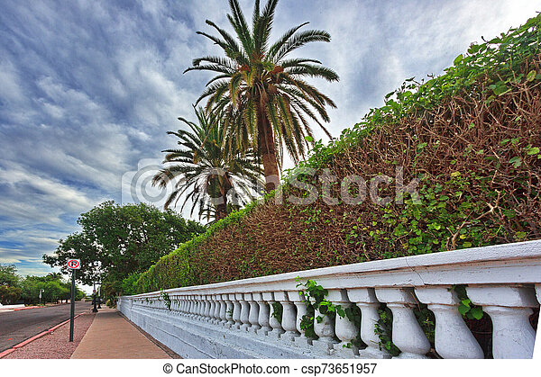 Elegant wall and hedge in Tucson - csp73651957