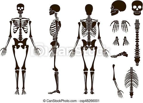 Elemente, skelett, totenschädel, collection., set., abbildung ...