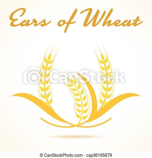 elemento, ou, arroz, trigo, illustration., orelhas, símbolo, centeio, isolado, packaging., experiência., cerveja, vetorial, desenho, cevada, colheita, branca, etiqueta, icon., pão - csp36165879