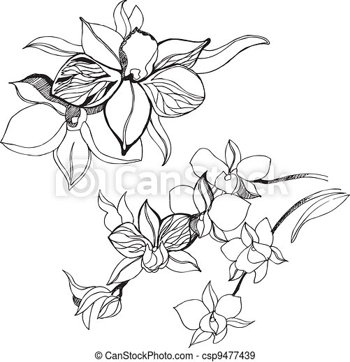elementos florais, desenho - csp9477439