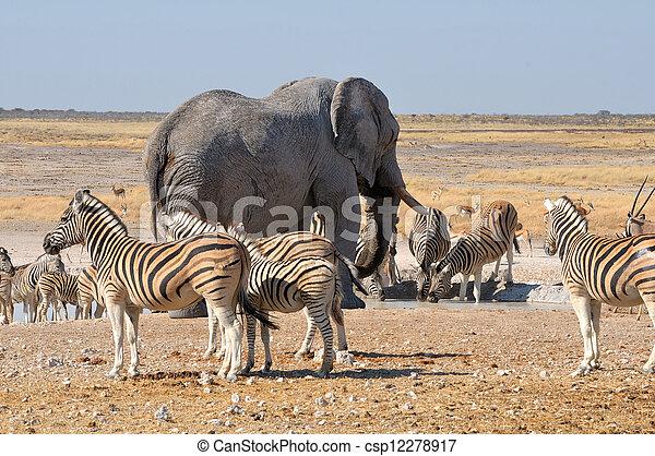 Elephant and zebras - csp12278917