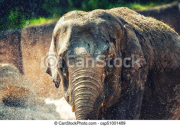 Elephant bathing - csp51001489