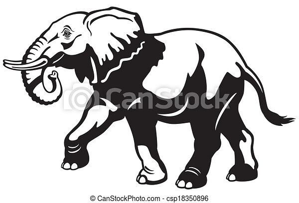Elephant black white csp18350896