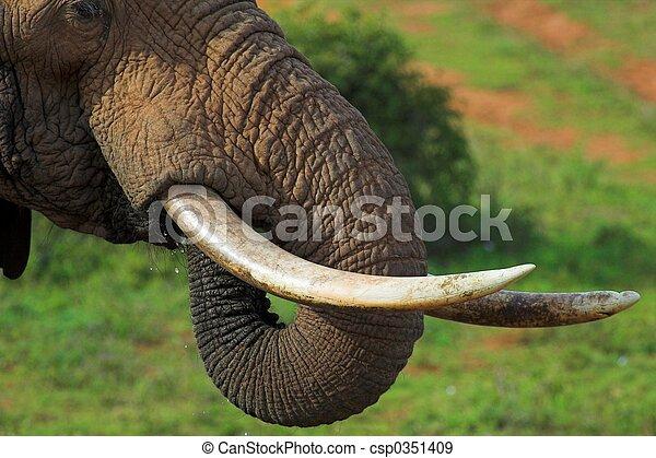 Elephant close up - csp0351409