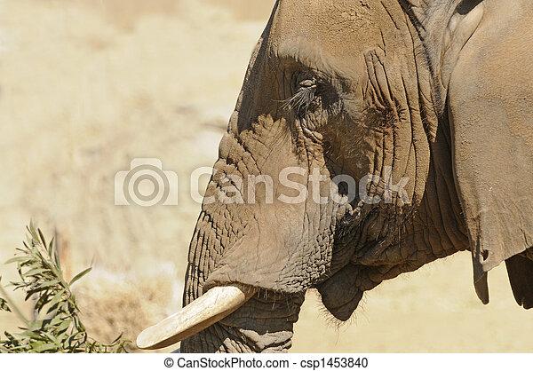 Elephant closeup - csp1453840
