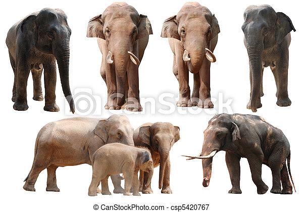elephant collection - csp5420767