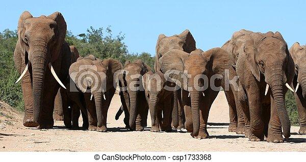 Elephant Family Herd - csp1733368