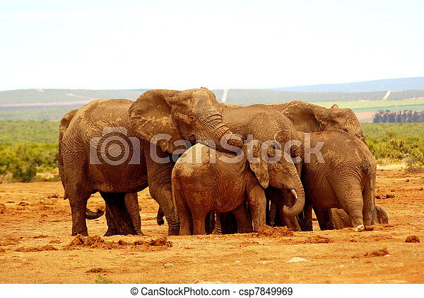 Elephant group hug - csp7849969