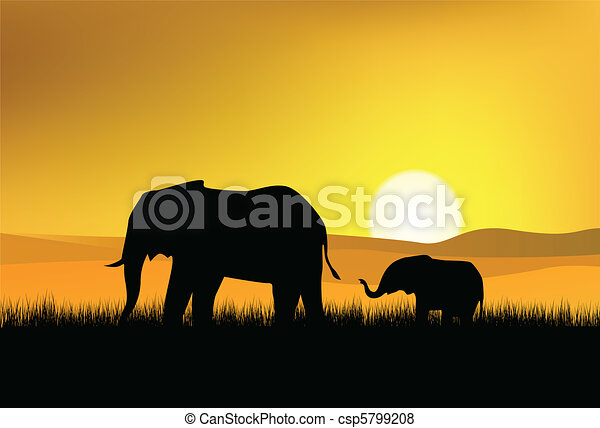 elephant in the wild - csp5799208
