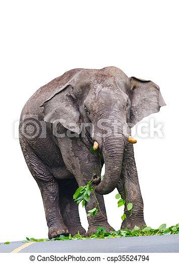 elephant isolated on white background - csp35524794